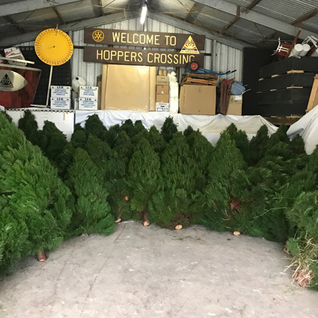 A virtual forest of amazing fresh Christmas trees to choose from