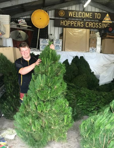 Another ripper Apex Christmas tree ready to go